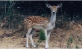 LOILAR0340000013_Zoo de Bouzigues_daim