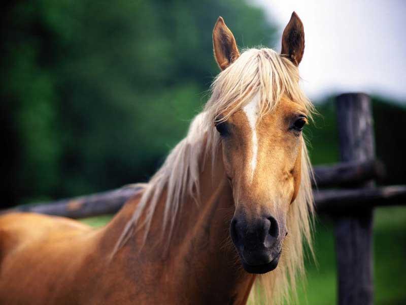 photo-cheval6